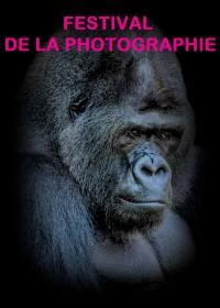 Festival de la photographie